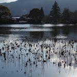 冬枯れの大沢の池